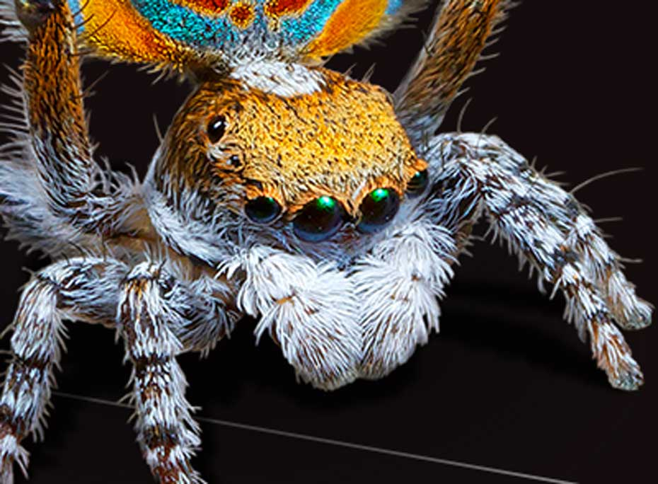 A close up of a spider's head.