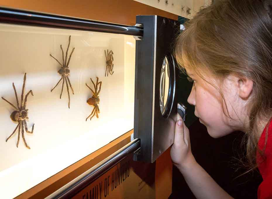 A girl looks at several examples of spider through a magnifying glass