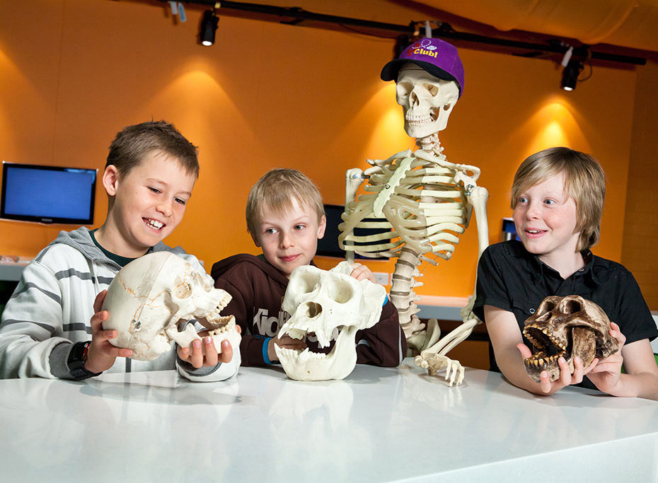 Three young boys with smiles on their faces are standing next to a replica human skelton and comparing a human skull and a large primate's skull.