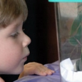 A young boy looking closely at a small tank containing leaves and a stick insect.