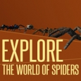 explore the world of spiders
