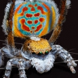 Link to spiders teachers page