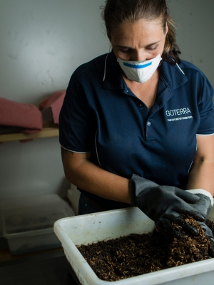 Olympia Yarger from Goterra sorting through a tub of fly larvae