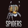 A Peacock Spider above the Spiders exhibition logo