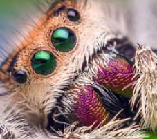 Close up photo of a spider. Photo by Thomas Shahan. Creative commons by 2.0