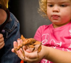 a young girl holding a stick insect in the palm of her hands