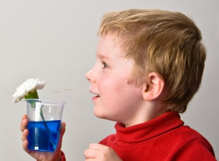 Boy with coloured liquid and flower