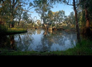 photograph of a calm river bend, with gum trees and long grass along the banks and trees reflecting from the water surface.