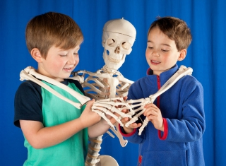 Two young boys standing next to a skeleton